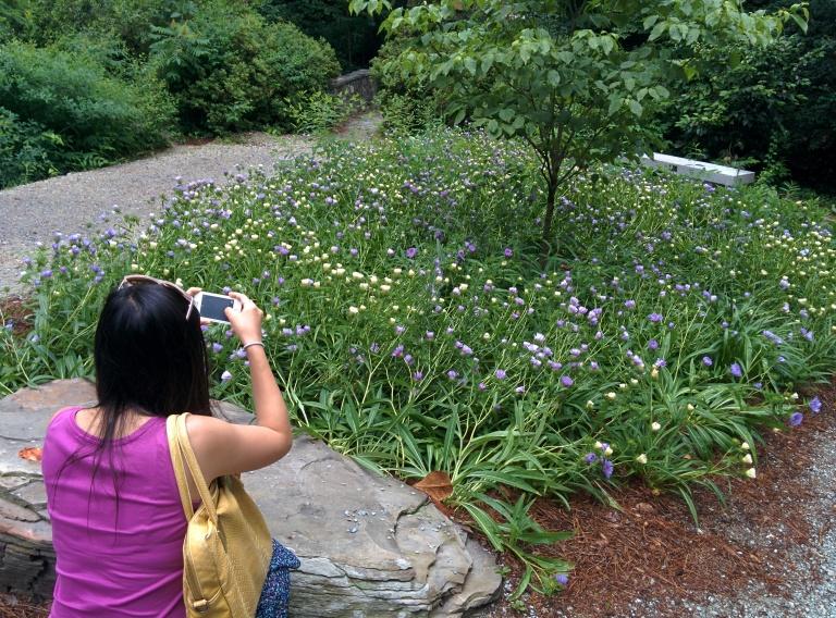 Monica busy taking pictures, Duke Garden, June 2014